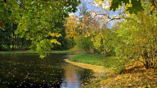 河,岸,树,绿色,天空,叶子,反射,美女