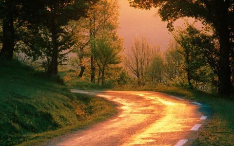 性质,秋季,路,转,森林,早上