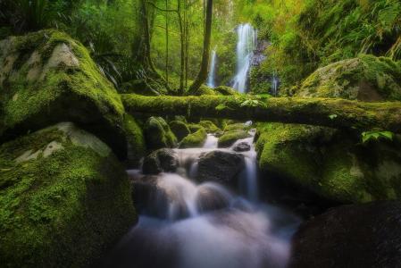 澳大利亚,森林,自然,石头,苔藓,树木,日志,瀑布
