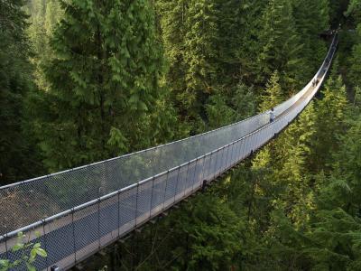 加拿大,不列颠哥伦比亚省,森林,吊桥,美丽