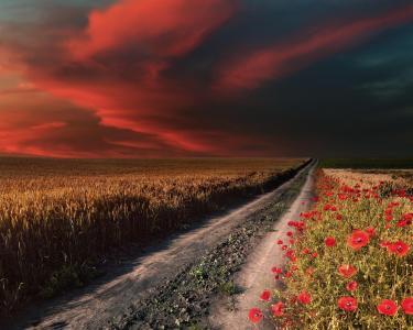 天空,场,道路,罂粟
