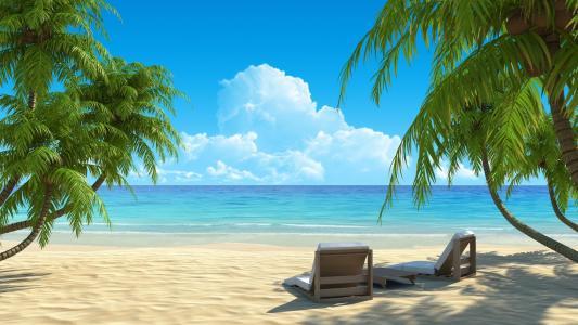 棕榈树,大自然,沙滩