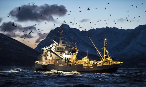 渔船,海,山,海鸥,库尔特·阿里戈