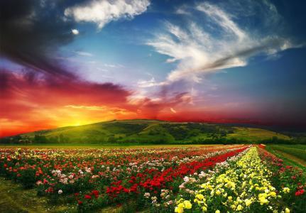 谷,日落,天空,云,玫瑰,鲜花,丘陵