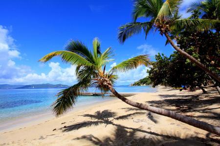 热带,沙滩,棕榈树