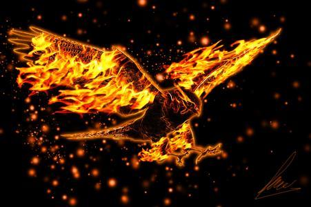 火,火焰,猎鹰,美丽