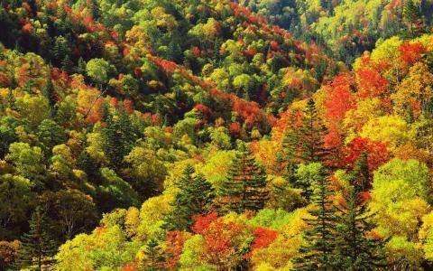 从上面看,色斑,森林边缘
