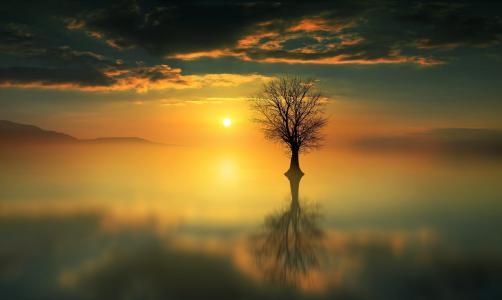 树,天空,太阳,水