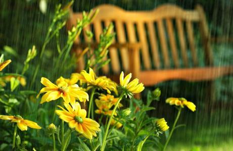 鲜花,公园,下降,夏天,雨,长凳,黄金菊