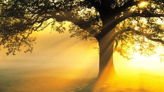 树,分支机构,美女,场,光线,光,太阳