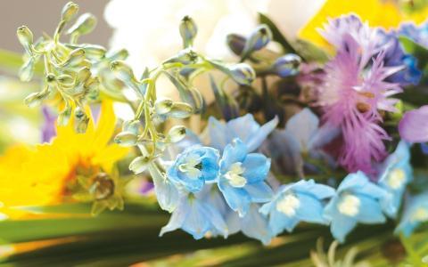 鲜花,花束,春天,表,背景,钟声,康乃馨,蓝色,粉红色,茎,美丽