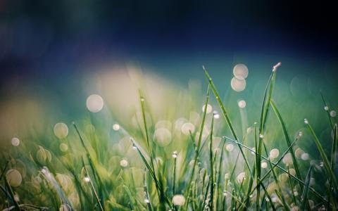 露水,草,散景