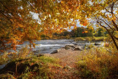 秋天,河,分支,性质