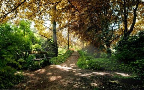 树,森林,树叶,路径,长凳,阳光