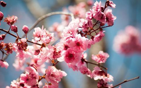树,开花,春天,鲜花,水果