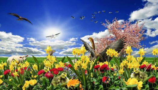 草甸,鲜花,鸟,飞机,天空,云,春天
