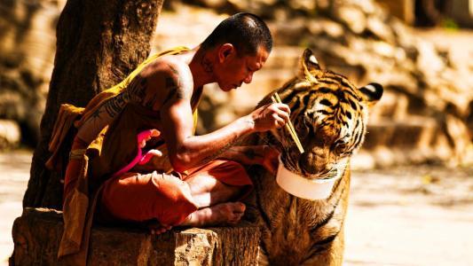人,老虎,照片,积极