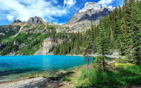 加拿大,公园,山,湖,森林,景观,Yoho,国家公园,性质