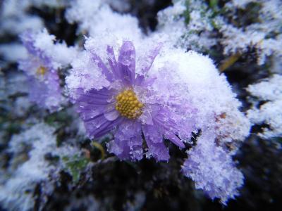 雨,雪,冰,秋,冷,霜,花,宏