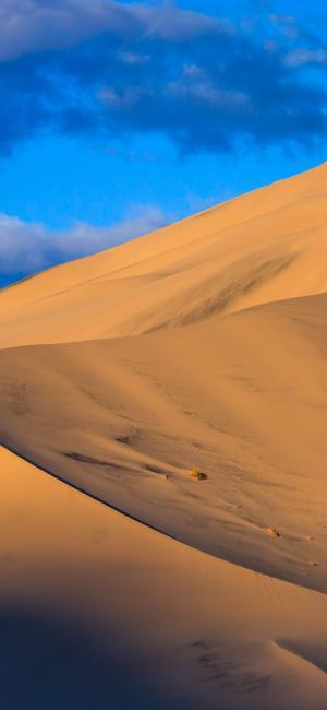 金黄色的沙漠
