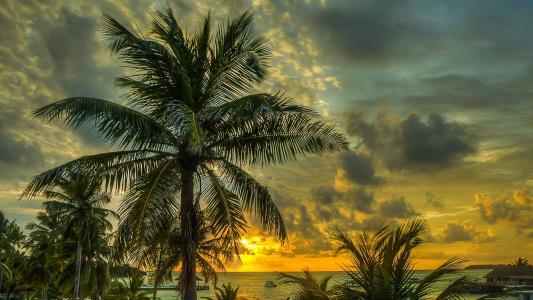 棕榈树,海,夏天,日落,美丽