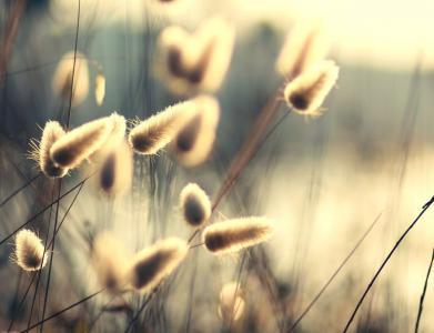 绒毛,光,光线,太阳,性质,植物,茎