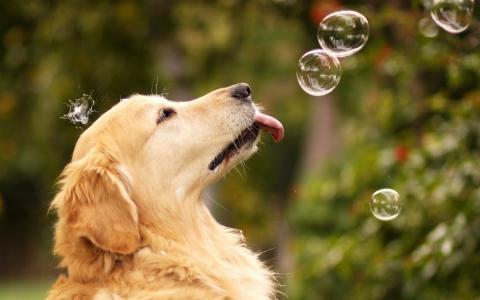 狗,泡沫,玩