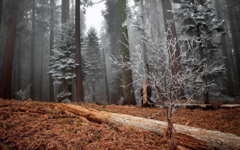 森林,树木,毛毛雨