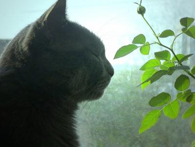 猫,配置文件,窗口,发芽