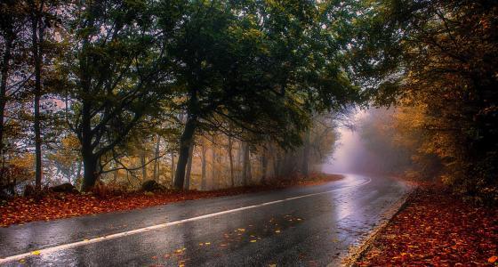 性质,道路,秋季,森林,雨后