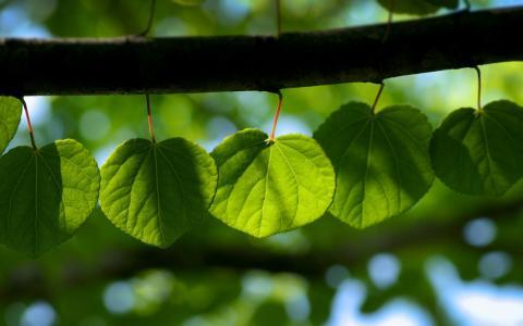 树皮,叶子壁纸,传单,光,叶子,热