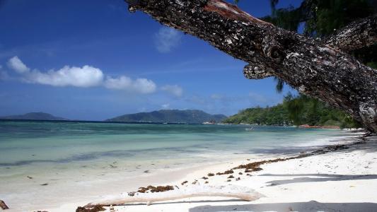 雪白的沙滩,海浪,绿叶
