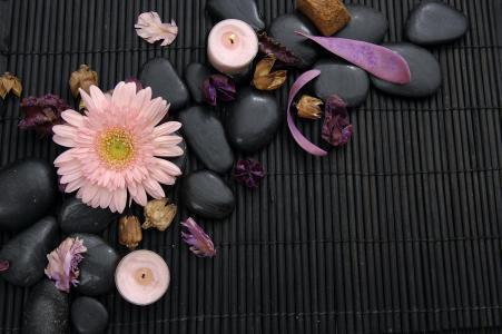 温泉,温泉石头,温泉,温泉石头,非洲菊,花瓣,花,非洲菊