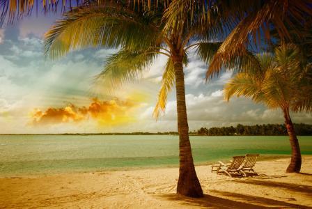photoshop,工作,okena,棕榈树,躺椅,棕榈树,天堂