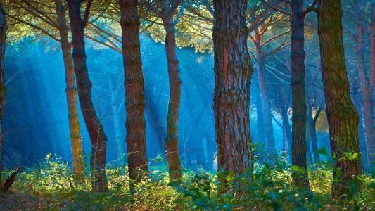 性质,森林,树木,树干,草