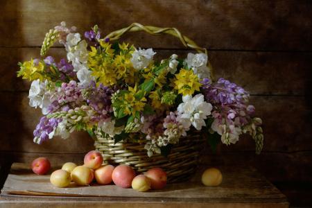 尼古拉帕诺夫,静物,静物,篮子,板,花,羽扇豆,水果,杏子