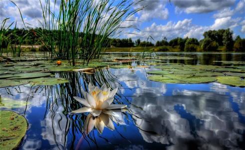 河,大自然,钓鱼,娱乐,美容,莲花