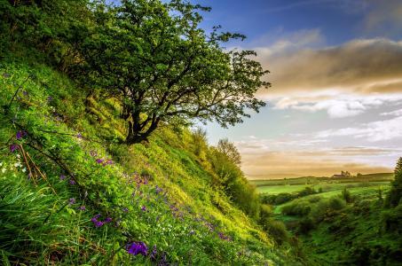 场,草,云,性质