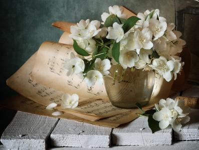 尼古拉·帕诺夫,板,花瓶,树枝,茉莉花,床单,笔记