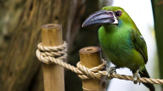 鸟,绳,喙,羽毛,颜色