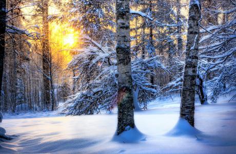 自然,太阳,雪,森林,冬天