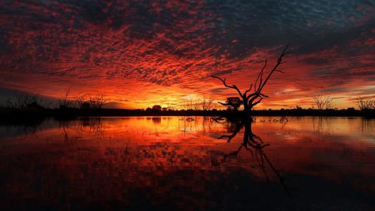 黑暗的天空,红色夕阳,水,树