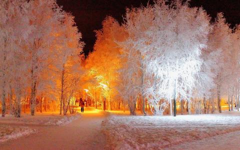 公园,灯笼,晚上,白霜,冬天,树木