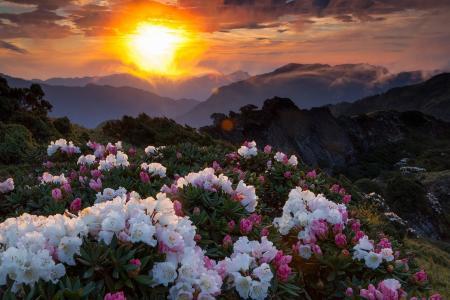 日落,山,景观,性质,鲜花