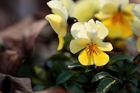 鲜花,美女,花卉,背景,花瓣,紫罗兰色,鲜花的世界