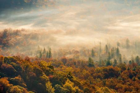 秋天,早晨,森林,雾,美丽
