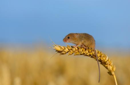 鼠标,秒杀,小动物,天空,背景,美女