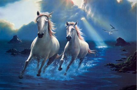 马,白,水,岸,海鸥