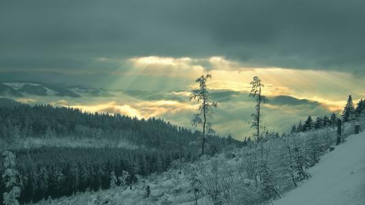 冬天,山,雪,树木