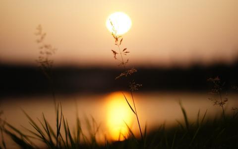 日落,草,宏